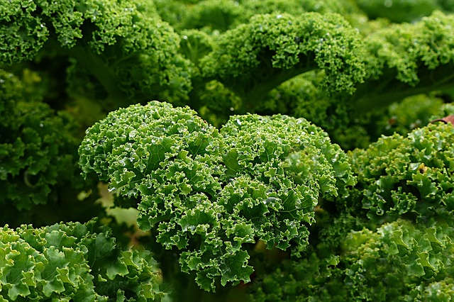 kale for beard growth